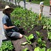 BBG's New Herb Garden