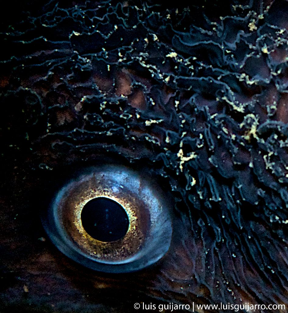 Abstract Moray Eye-19/365