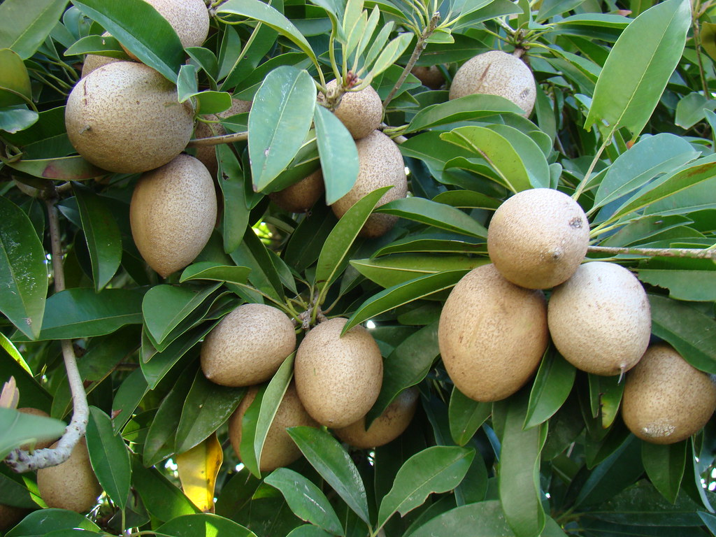 passion fruit in spanish fruit trees for sale