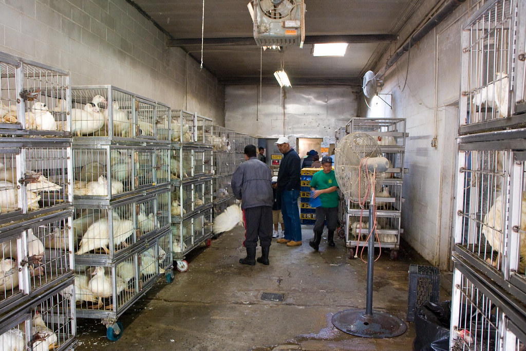 New York Halal Food Cart Amherst
