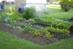 tilt shift garden | by jrcraft