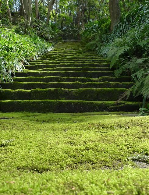 Myohoji moss stairs