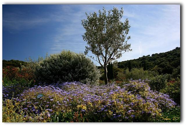 Le jardin d 39 eden flickr photo sharing for Le jardin d eden
