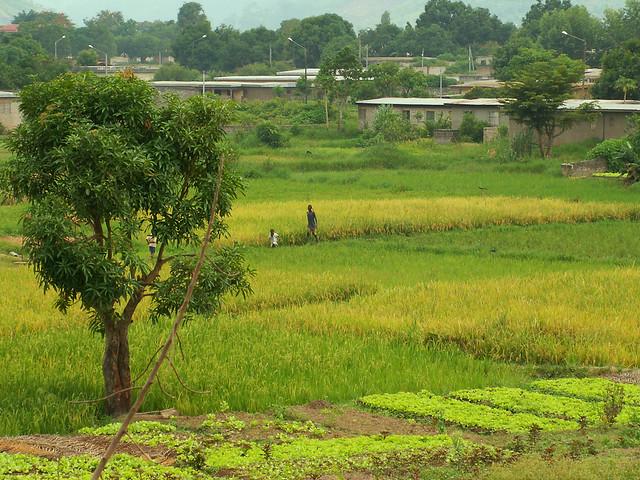 paysage ivoirien 8 c te d 39 ivoire 2006 guillaume ferreux flickr. Black Bedroom Furniture Sets. Home Design Ideas
