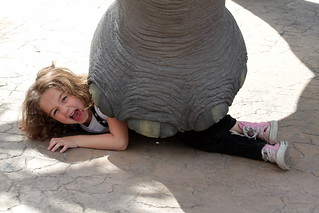 Kids Giving you problems? Hire an Elephant | by peasap