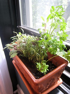 Windowsill herb garden: sage, rosemary, parsley | by mmadden