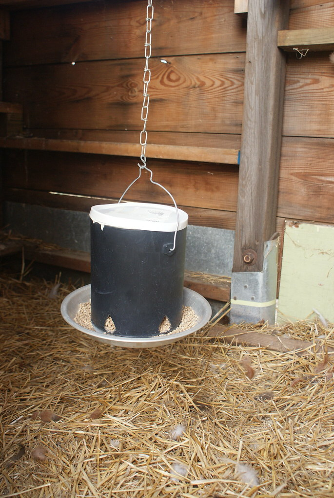 Diy Chicken Feeder Paint Can Pie Plate Ill Fitting Lid