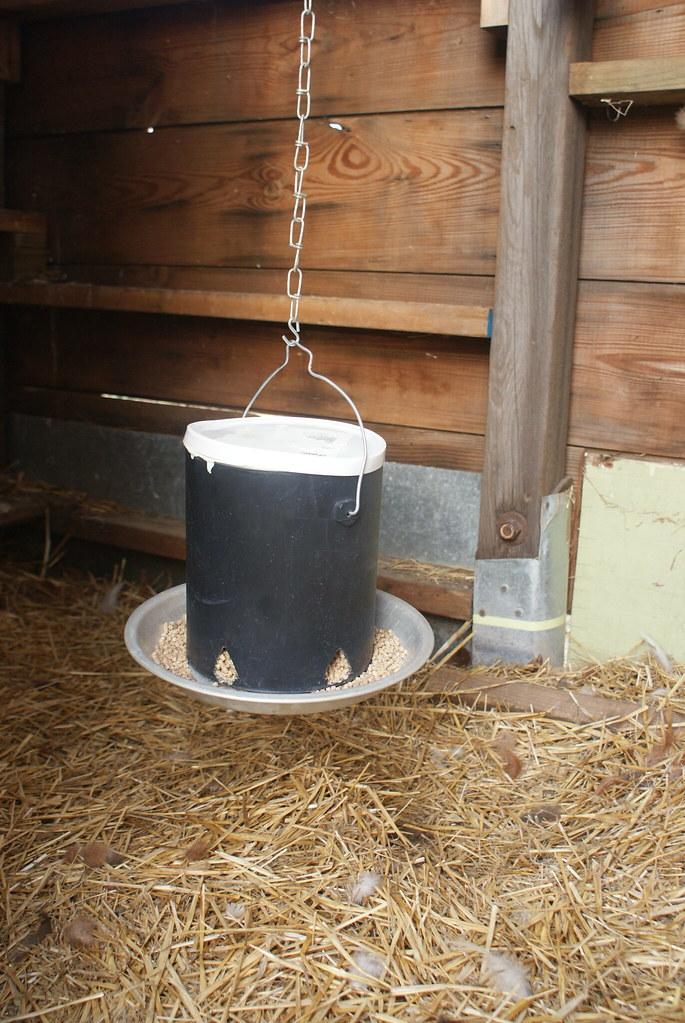 Diy chicken feeder paint can pie plate ill fitting lid for Diy chicken feeder light