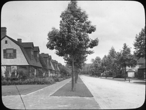 Biltmore, NC– Lindon Trees | by OSU Special Collections & Archives : Commons
