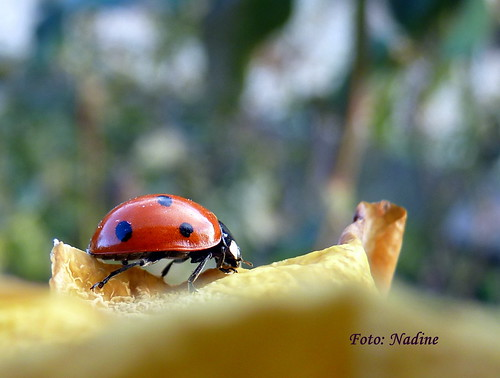 First Super Macro Model of 2010 | by Nadine V.