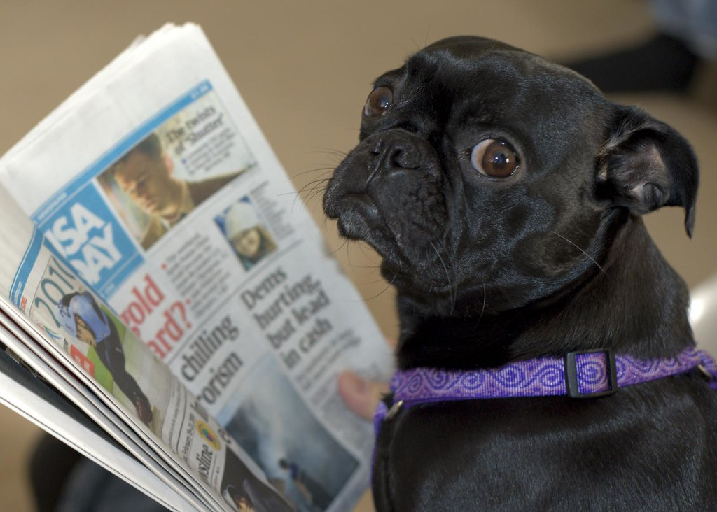 Dog Reads Newspaper Molly The Dog Attempting To Read