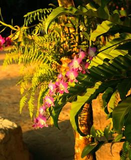 Hotel Beach Orchid Kollam