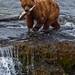 Alaska-July2009-6181