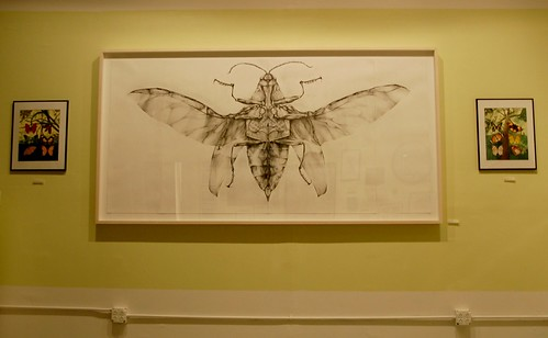 Joianne Bittle, Jewel Beetle (ventral side), graphite on paper | by Curious Expeditions