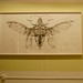 Joianne Bittle, Jewel Beetle (ventral side), graphite on paper