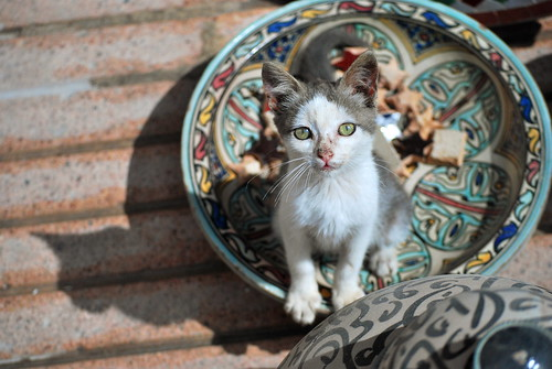 Ceramic kitten | by Mariska de Groot