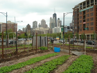 04-City-Farm-Chicago-IL | by Piush Dahal