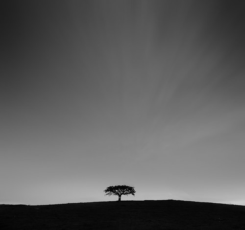 lonely | tree | by omaroza