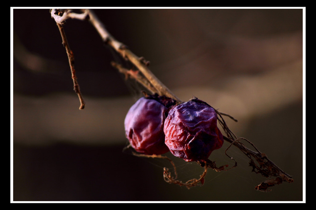 Shriveled Berries By Artistique Atmosphere Shriveled Berries By Artistique Atmosphere