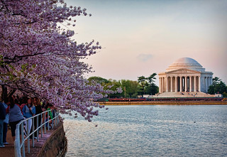 Cherry Blossoms on the Potomac | by marc.benton