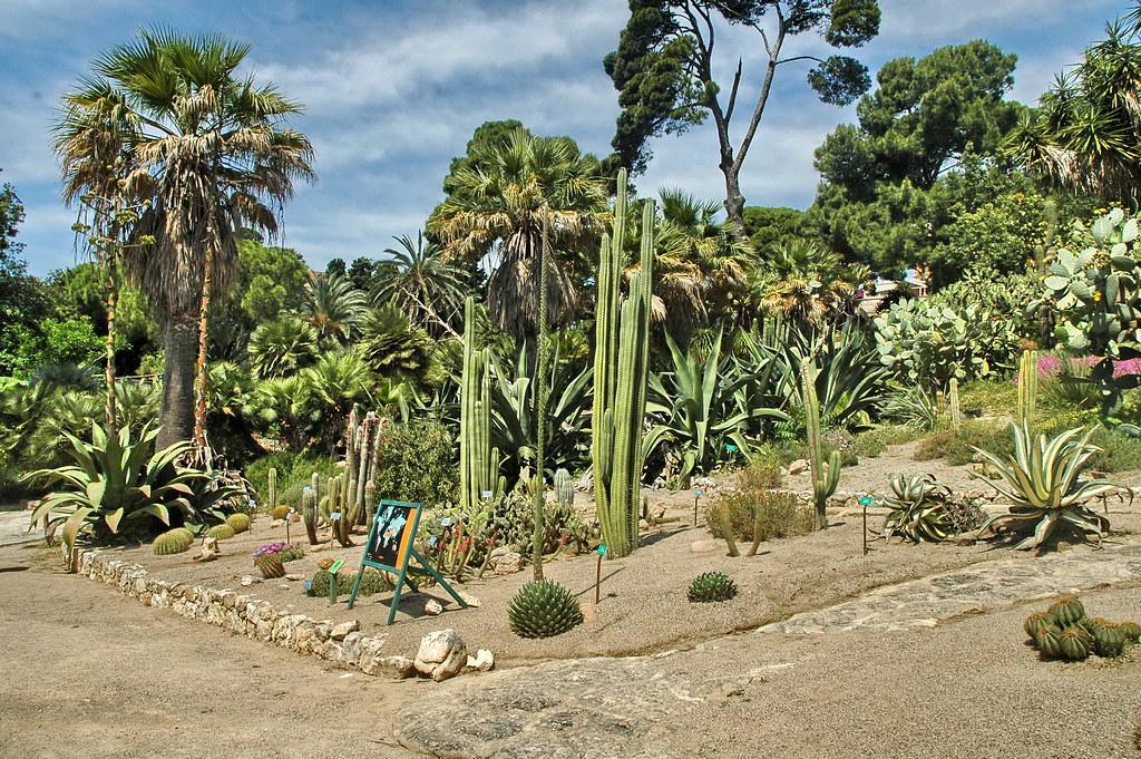 Giardino delle piante grasse cagliari orto botanico for Giardino 3d gratis italiano