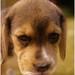 My Dog Ate My Website!