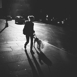 """The Dog Who Wanted to Be Seen"" 