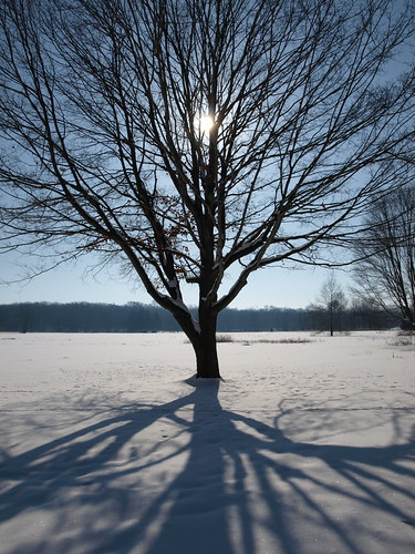 Winter Shadows | by tim.perdue