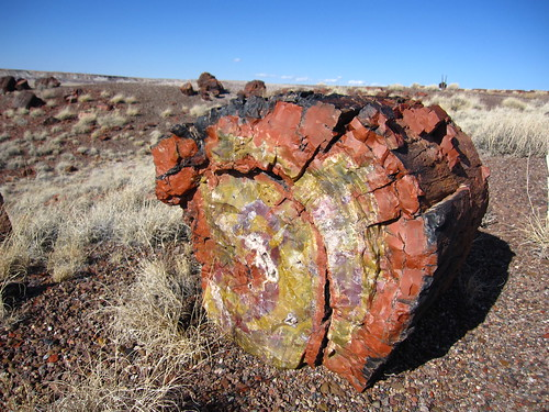 Petrified Wood | by cm195902