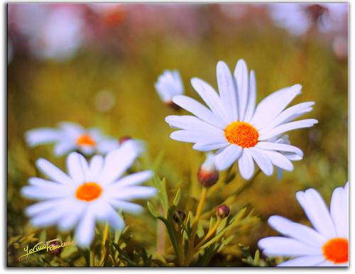 Fiori di campo please no invitations and no multi - Immagini di fiori tedeschi ...