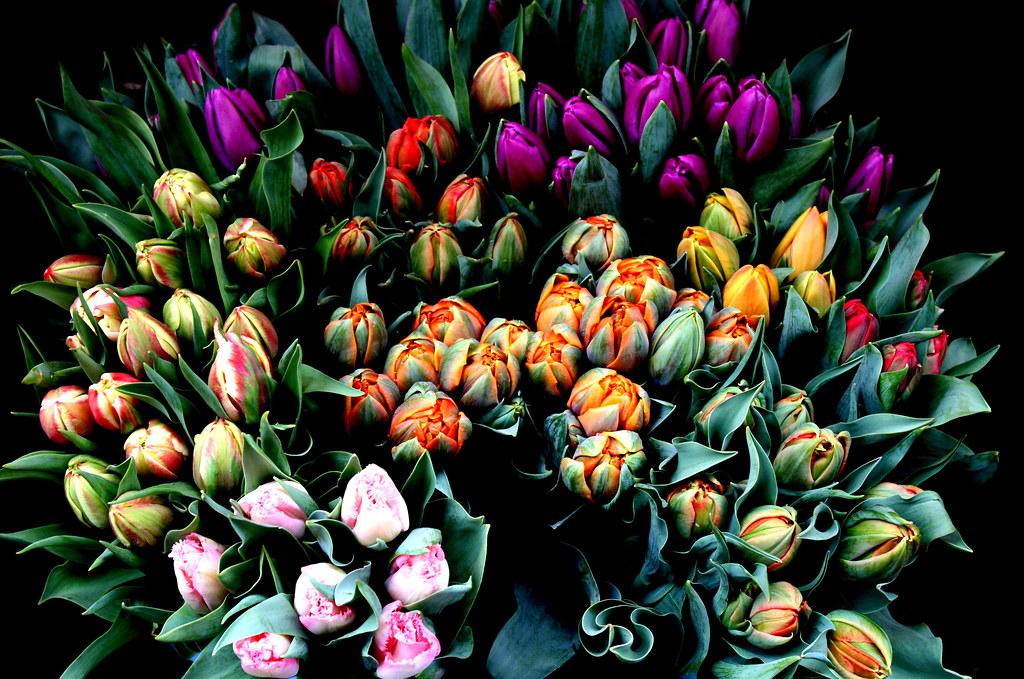 ... | March 26, 2010 The Flower Market Zagreb, Croatia 26… | Flickr
