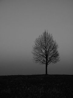 tree (142a) | by Ange 29