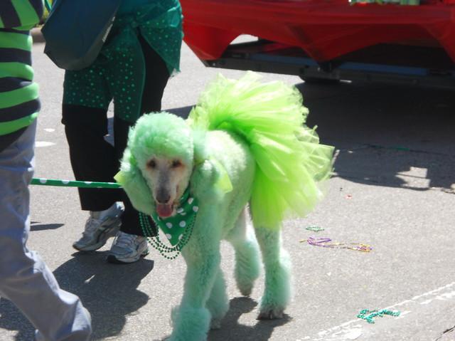 Green Poodle | Kyle | Flickr