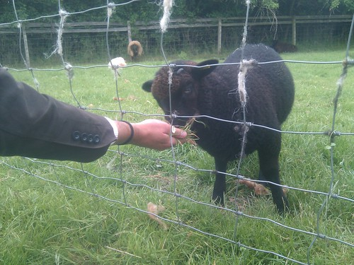 Tudor Festival - Baby Goat | by Shakespeare Birthplace Trust