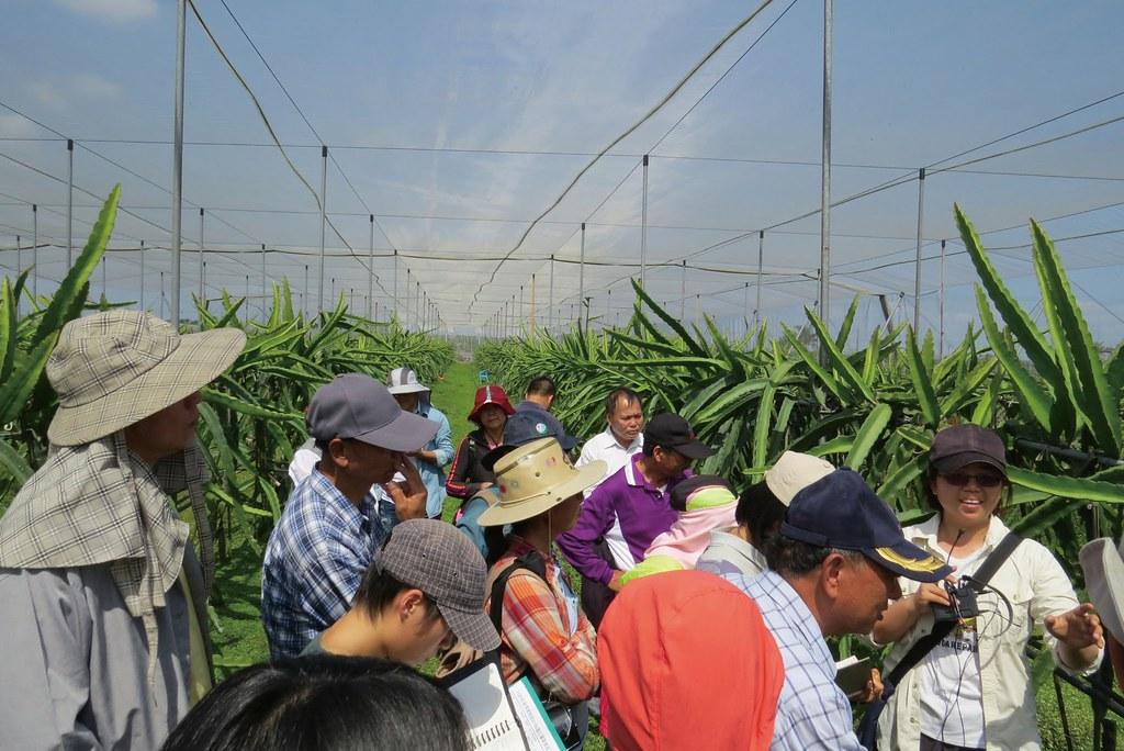 社大友善農課程,讓章信選擇了友善農法,讓友善農法的火龍果園成為上課場地。