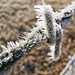 barb wire and ice crystals