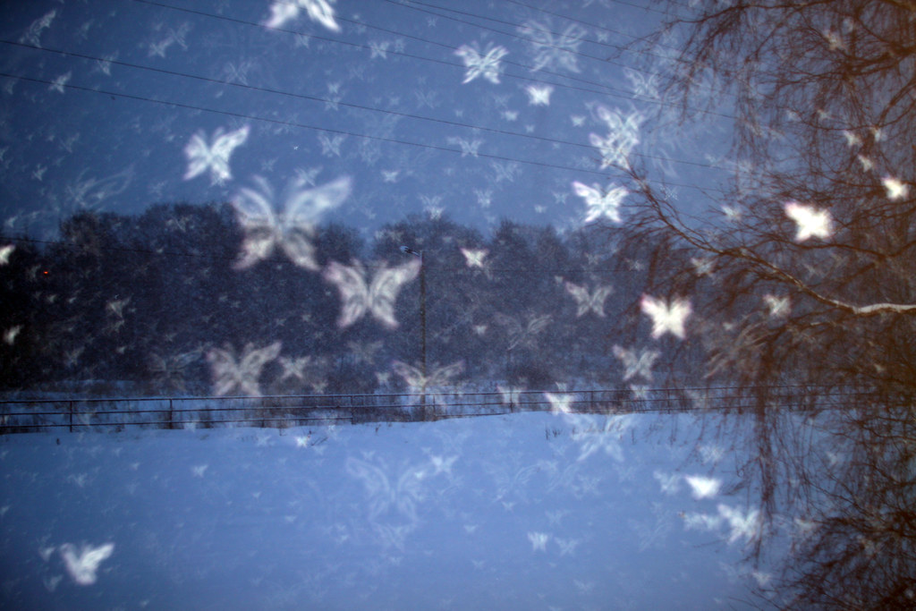 Winter Snow Butterflies | Aperture (bokeh) effects with ...