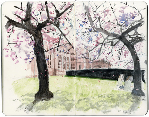 Cherry Blossoms in Kelvingrove | by Wil Freeborn