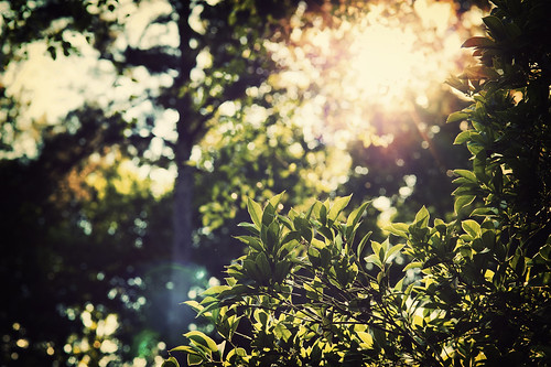 Sun (146 of 365) | by lighthack