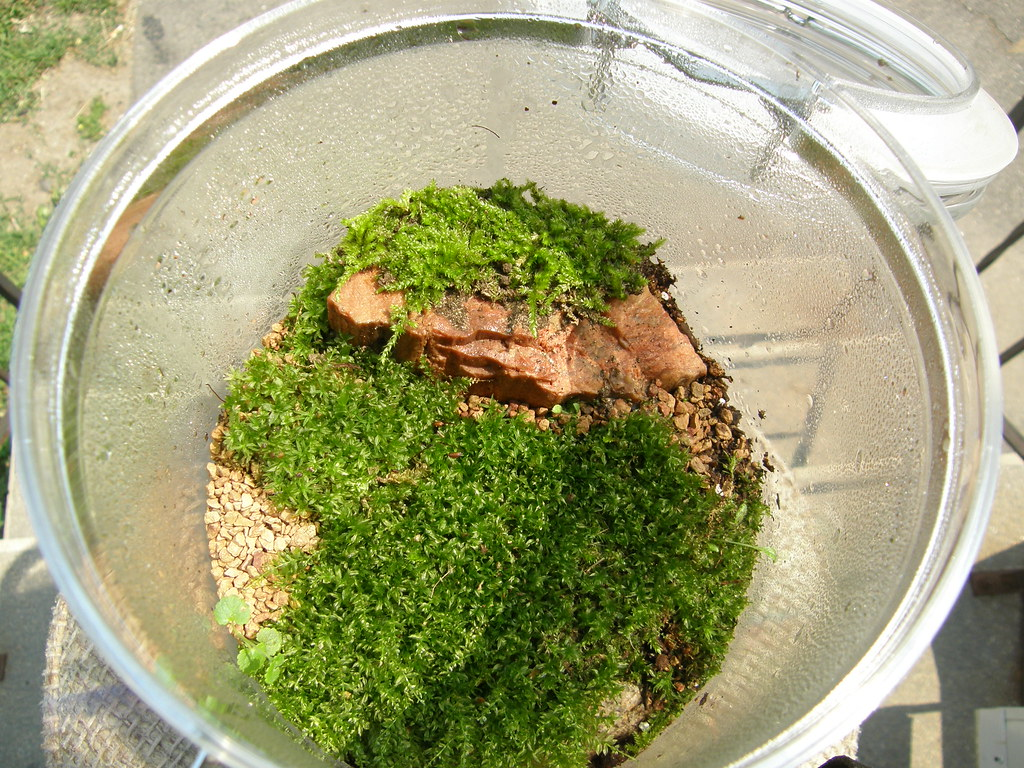 Large Moss Terrarium Small To Medium Sized Viewing Stone N Flickr