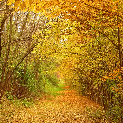 autumn tube | by Marsala Florio