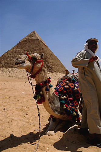 camel egypt | by J03YgIrL