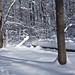 Chapin Forest Winter Scene
