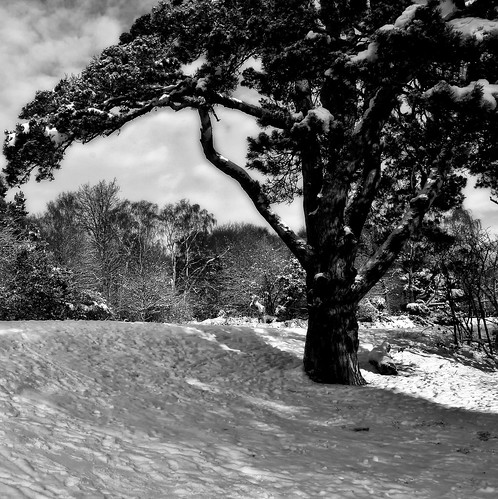 Snow Shadows B&W | by ROB KNIGHT photography