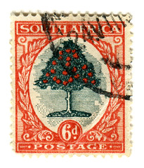 South Africa Postage Stamp: Orange Tree | by karen horton