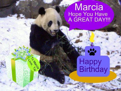 Happy Birthday Marcia Tai Shan Eating Bamboo At