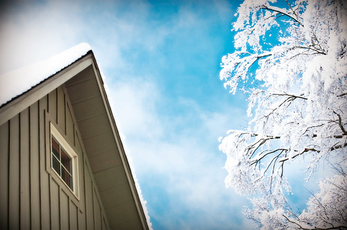 Morristowne House and Snow Tree | by Morristowne