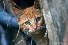 Tube's cat | by Eduardo Galindo