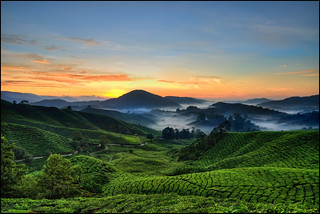 Cameron Highlands Sunrise | by Souvik_Prometure