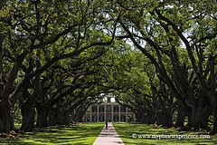 Louisiana experience : Oak Alley plantation | by My Planet Experience